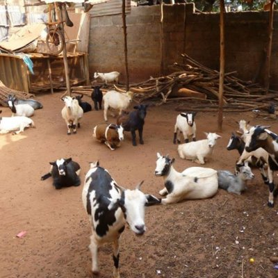 Mission aménagement : Enclos à chèvres