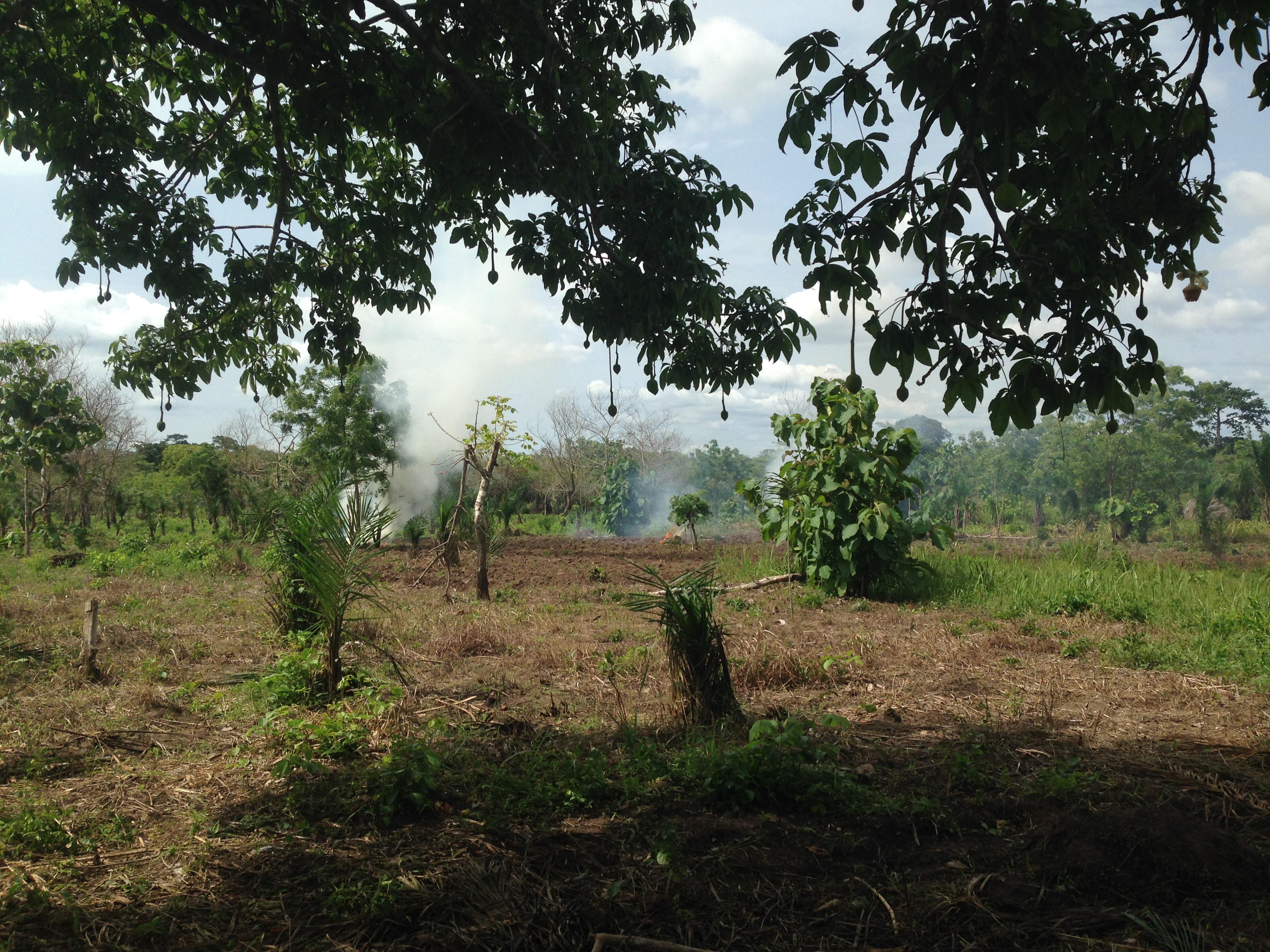 Mission aménagement : Plantation d'ignames