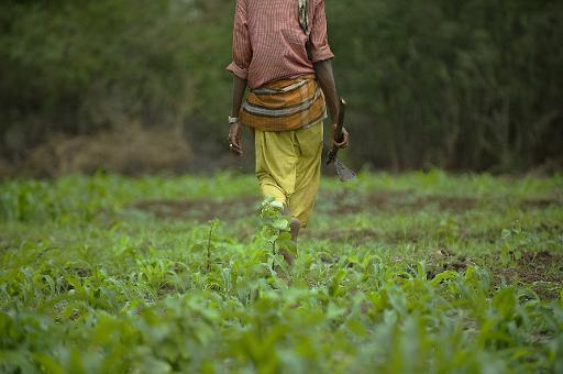 Avril 2016 : achat de deux terrains cultivables